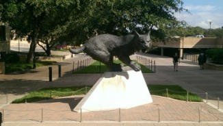 Texas State's Bobcat Statue.