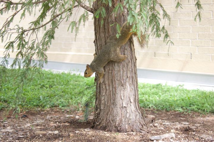 Earth Day squirrel on tree