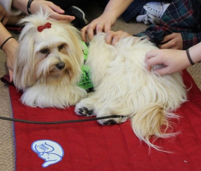 Therapy dogs will be at the Alkek Library May 3 and 4 from 1-3 p.m. for finals week. Photo by Carlos Marquez III.
