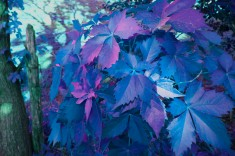 Purple and blue paint.