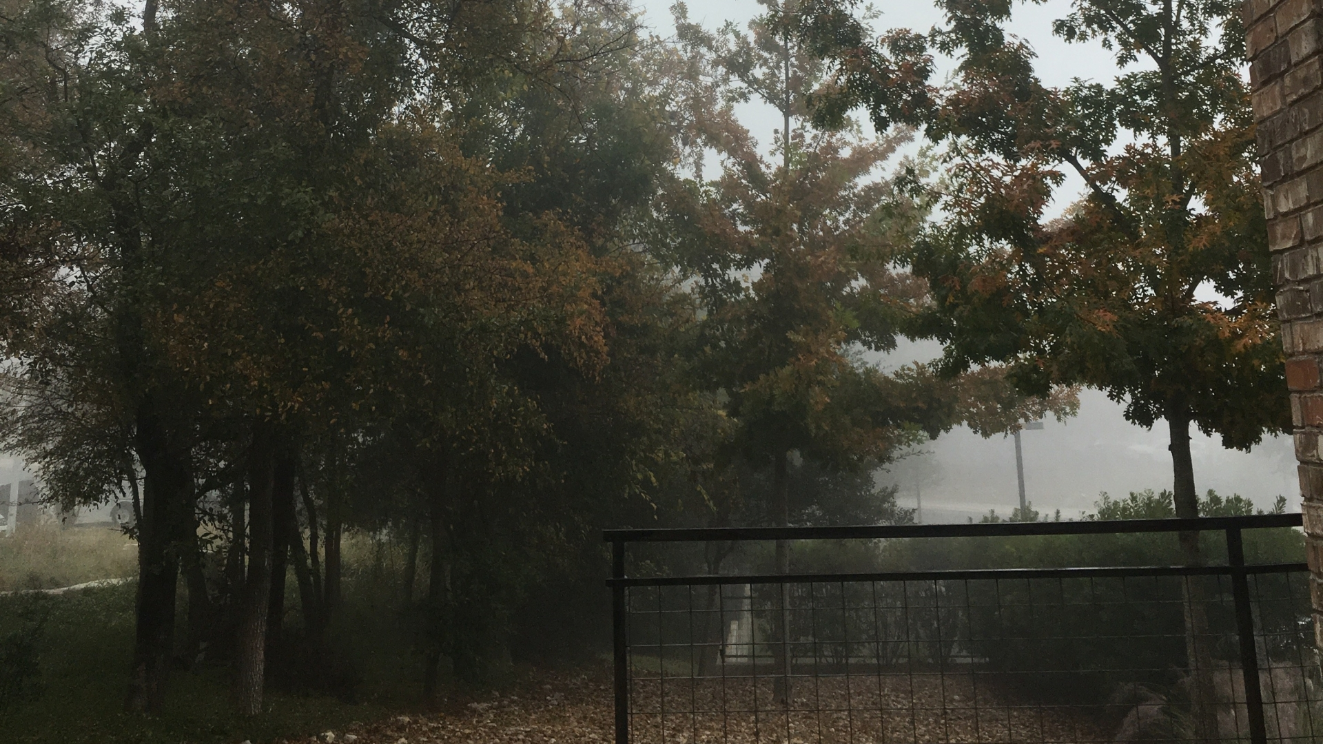 a shot of a foggy day with trees and orange leaves on the ground