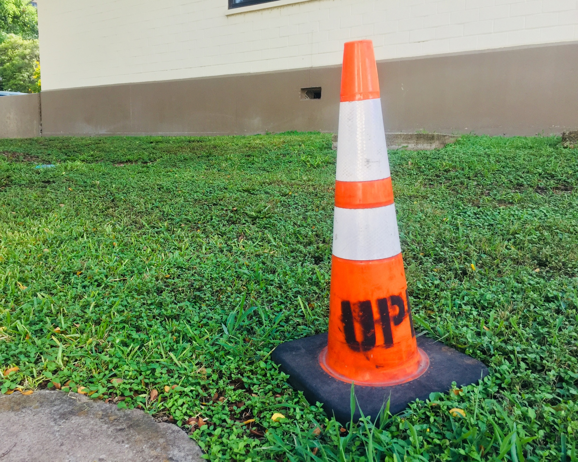 Cone in the grass