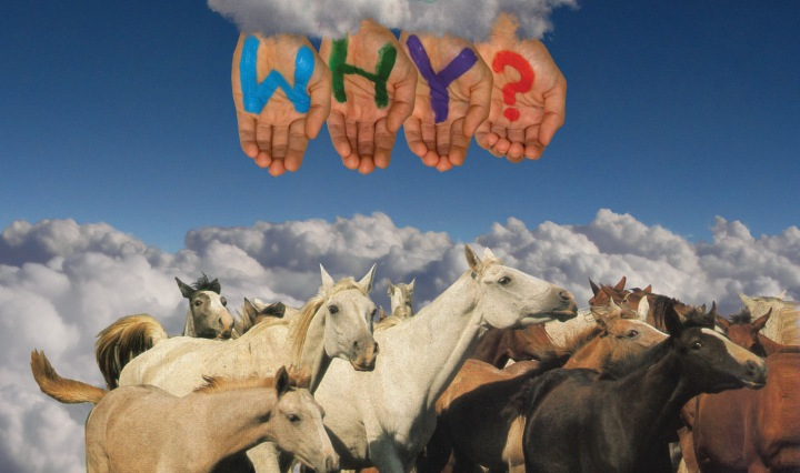 """Several horses on a backdrop of clouds with """"WHY?"""" painted on four hands."""