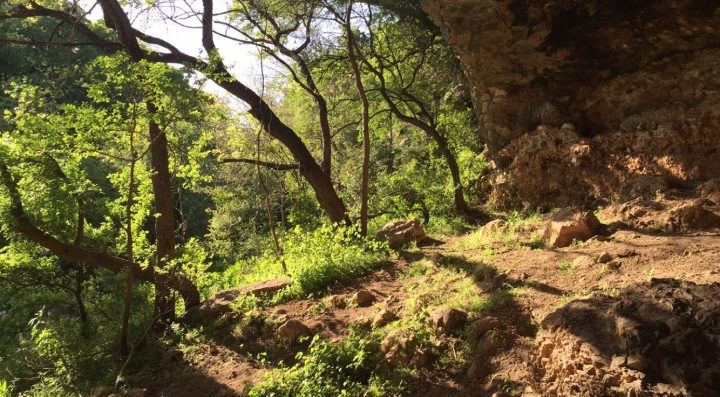 view from a cave looking out into the woods