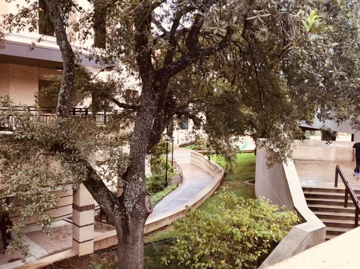 image of trees and wildlife located around campus