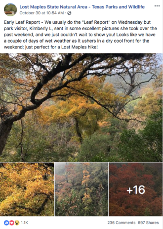 Four photos of yellow and orange leaves on a Facebook page.