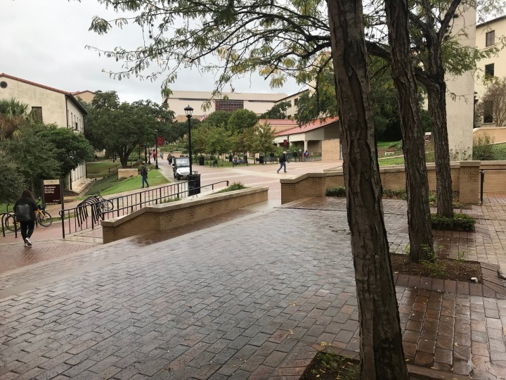 an image of trees and the walkway adjacent to the quad