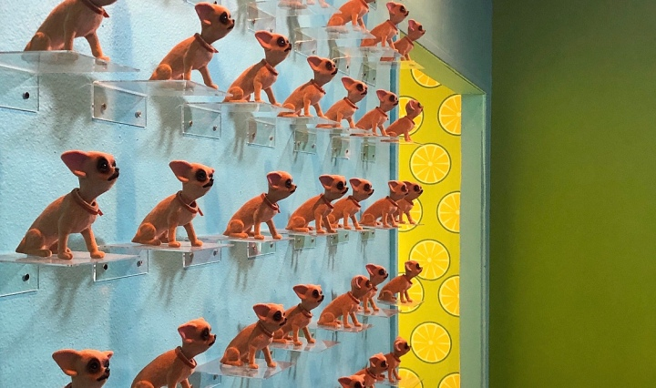A blue wall with Chihuahua bobble heads covering it