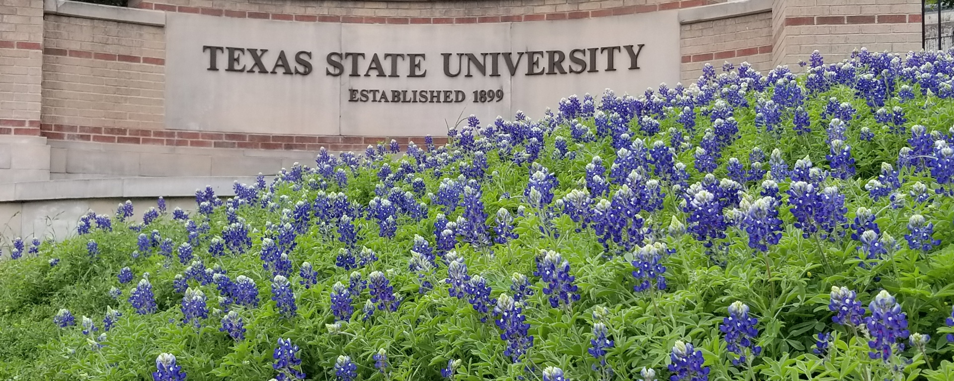 Blue flowers in front of a Texas State University sign