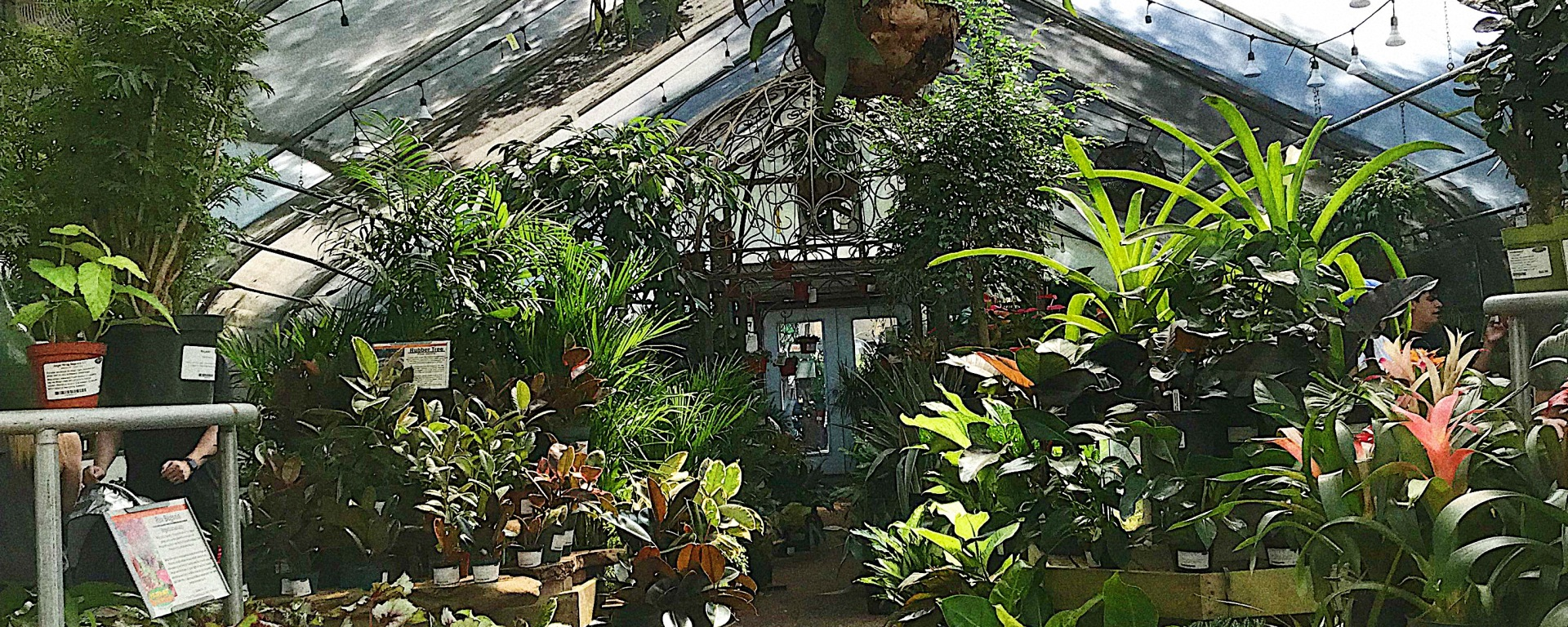 A lush greenhouse containing tons of displays of houseplants.