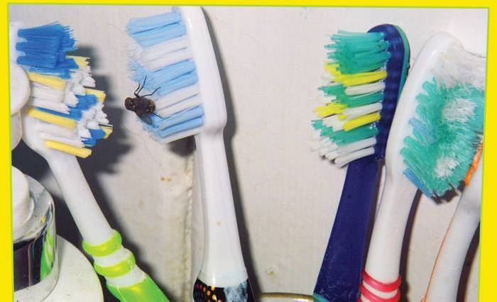 A close-up picture of four toothbrushes line up horizontally on a yellow backdrop. The 2nd brush from the left has a small fly on it.