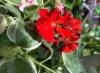 Health Benefits of Having Plants