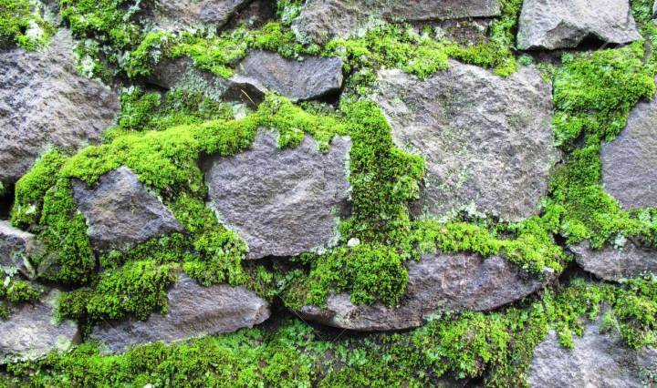 stone wall pictured. The stones are coated with moss.